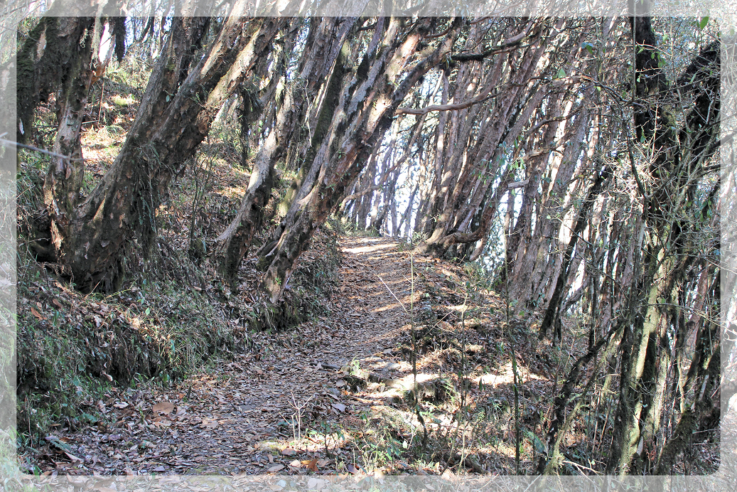 Pathway: Singlila National Park
